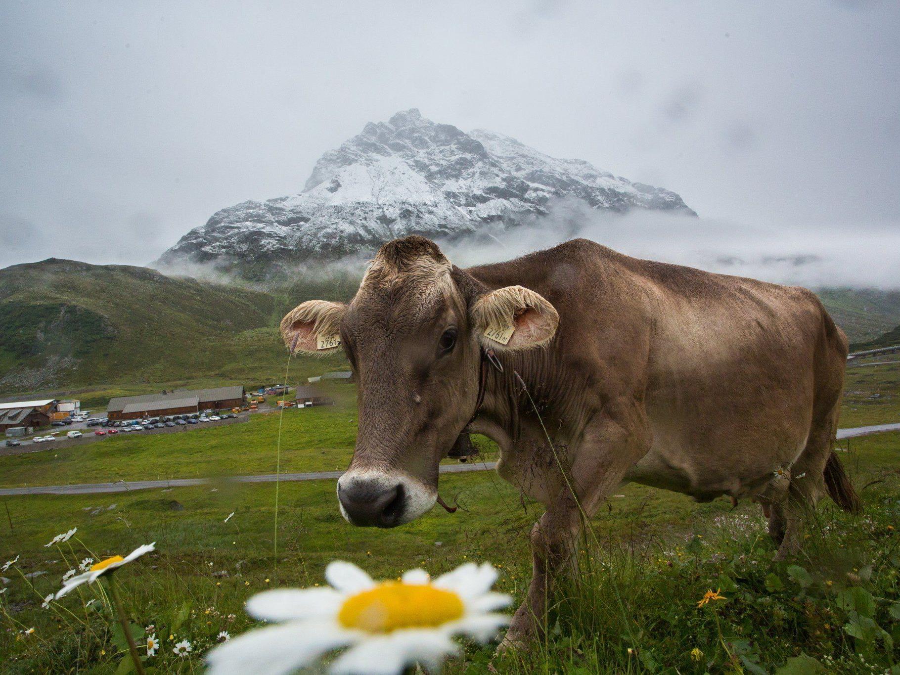 Derzeit alles andere als sommerlich auf der Bielerhöhe: Am Mittwoch fiel die Schneefallgrenze auf 2.100 Meter.