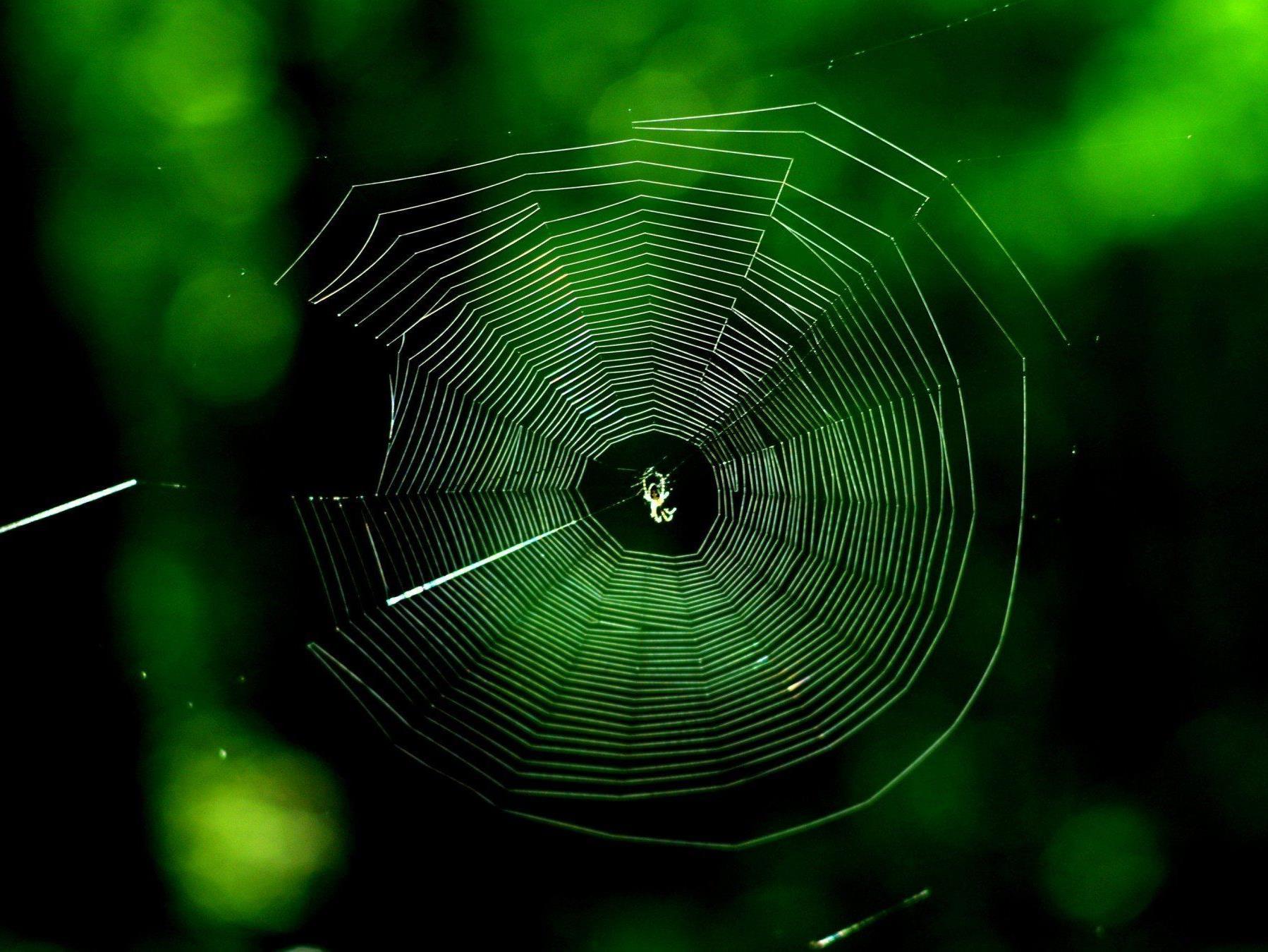 Ob die Spinne den Brand überlebte, blieb unklar.