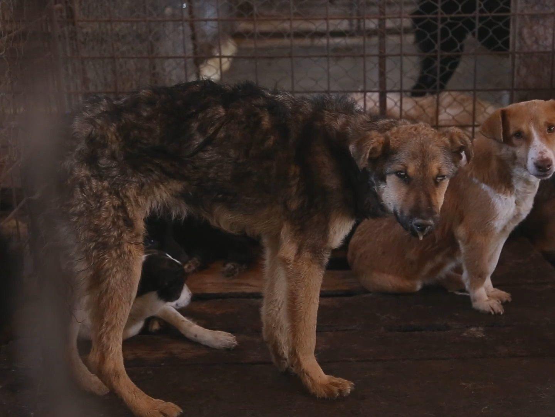 Vier-Pfoten-Video zeigt katastrophale Zustände in rumänischen Tierheimen.
