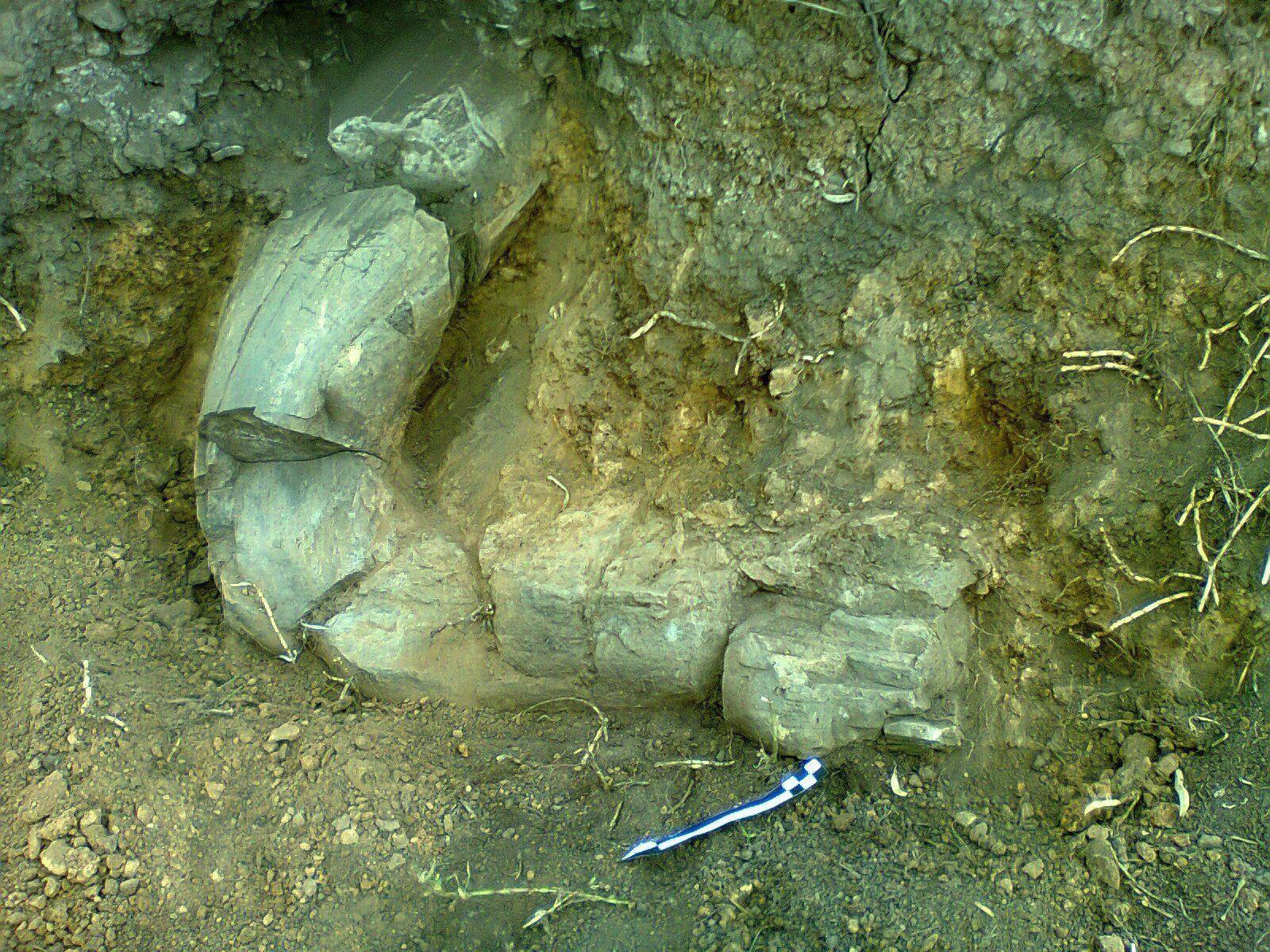 Mammut-Stoßzahn: Erstmals Überreste in Opfergabe gefunden