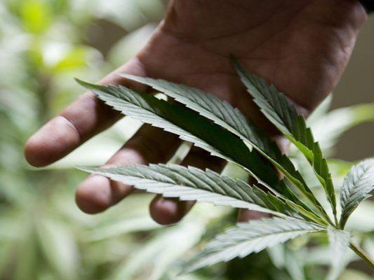 """""""Legalize! Östereich"""" fordert die Legalisierung von Cannabis."""