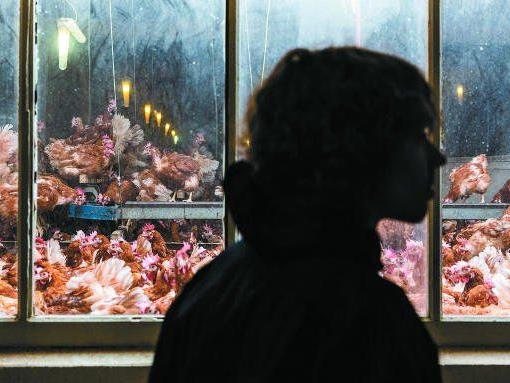 """VGT-Aktivist Tobias Giesinger: """"Hier sind aber viele Tiere untergebracht."""" Die gesetzlichen Bestimmungen würden aber eingehalten, so der Betreiber."""