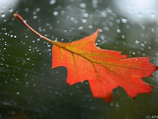 Herbst bringt bunte Blätter