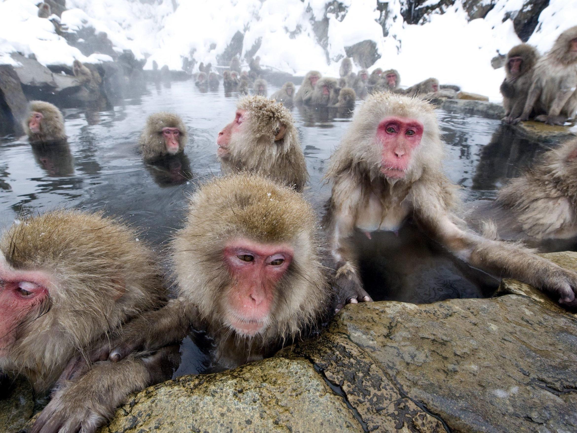 Makake sind sehr freche Tiere und klauen öfters Dinge von Menschen.