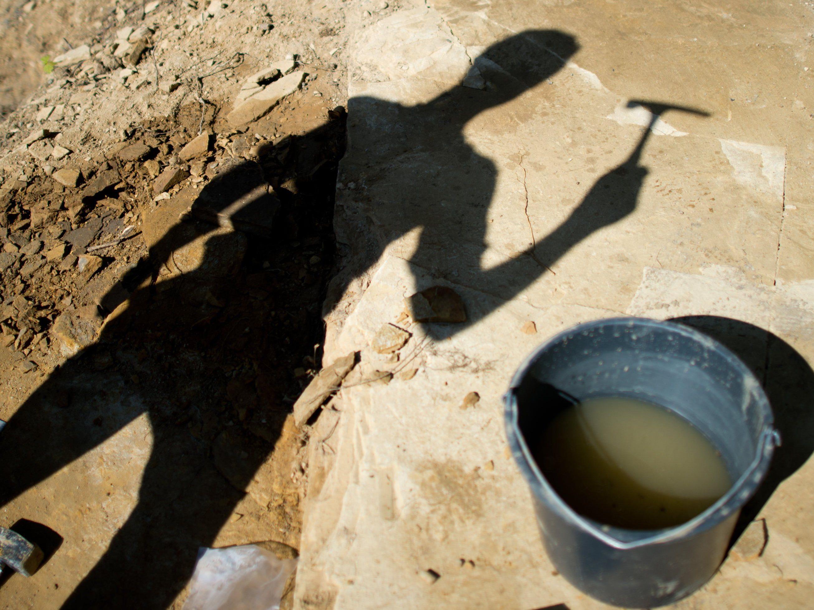 Die Überreste eines reptil-ähnliches Landlebewesens wurden in den Karnischen Alpen gefunden.