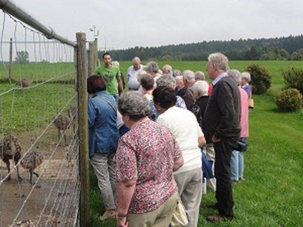 PVÖ Rankweil besucht Straußenfarm