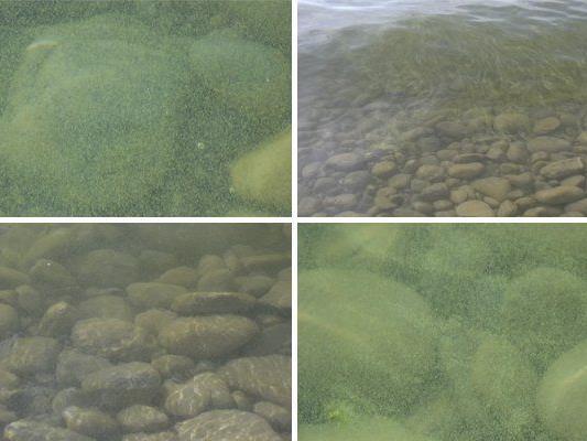 Die Blaualgenkolonie am Bodensee klingt gerade ab