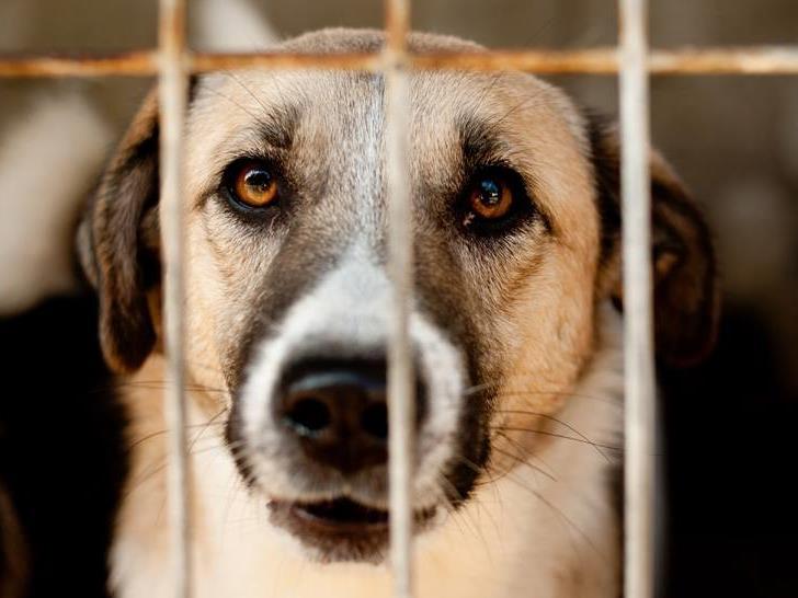 Bukarester Tierschutzaufsichtsbehörde ignorierte laut Vier Pfoten gesetzliche Aufhebung