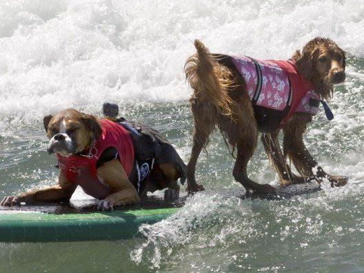 Hundesurfen in Kalifornien