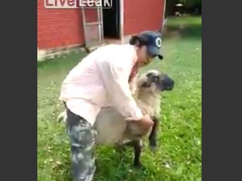 Ein Betrunkener hat ein Schaf verhöhnt und bekommt die Rechnung dafür.