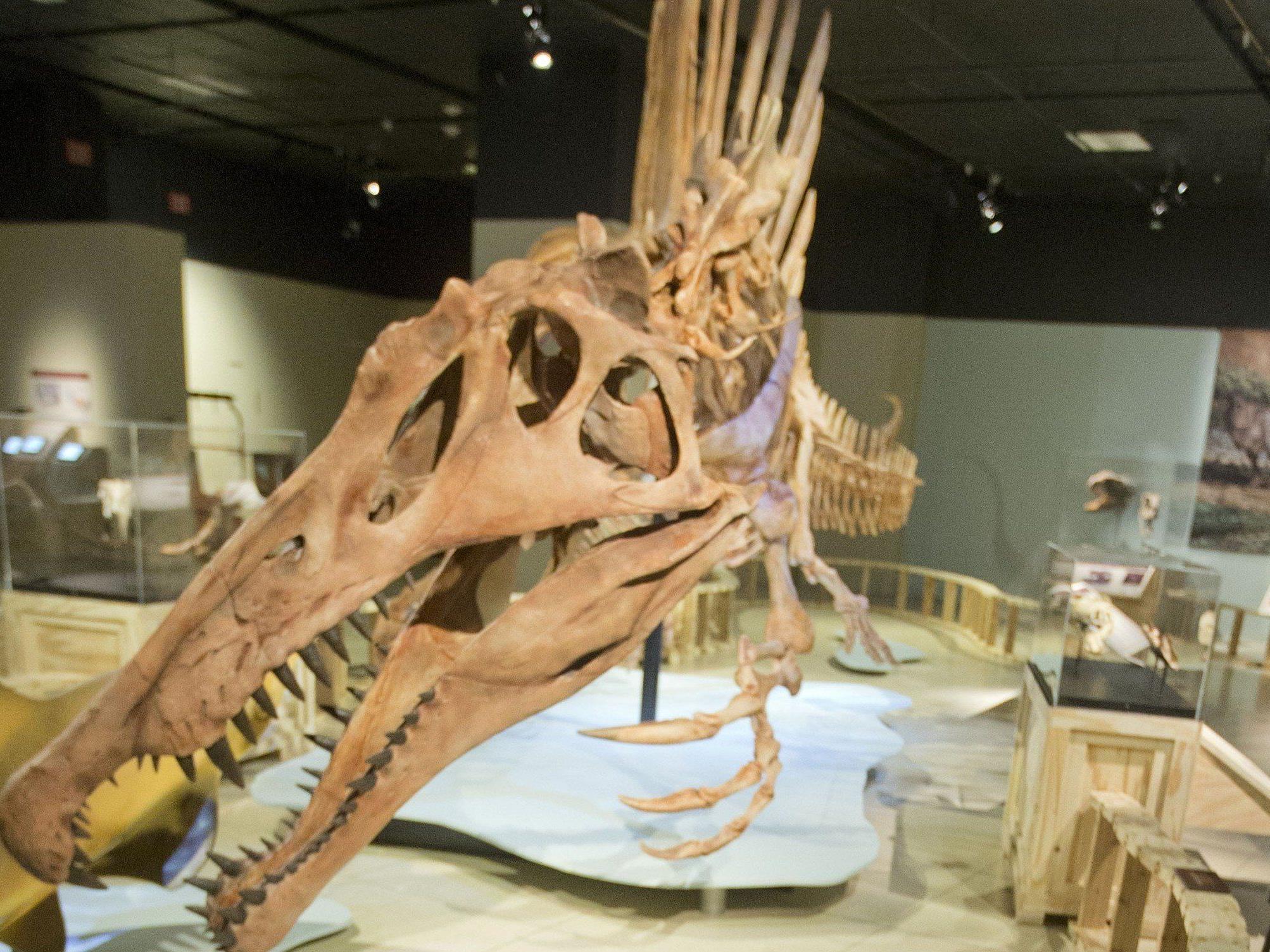 Spinosaurus aegyptiacus war in mehrfacher Hinsicht ungewöhnlich.