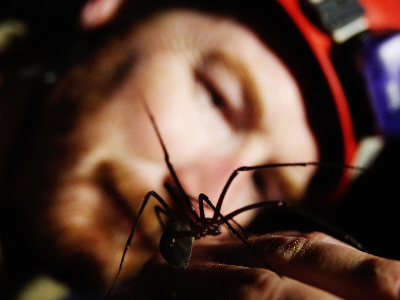 Drei Tage lang hat ein Australier mit einer Spinne im Bauch gelebt.
