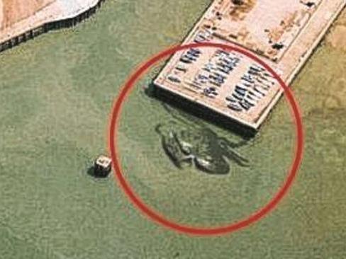 Ist das eine riesige Krabbe oder ein Fake?
