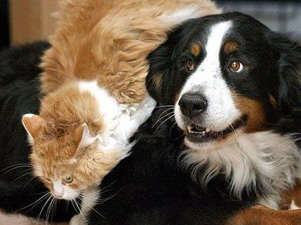 Ob Hund, Katze oder anderes Haustier - bei der Haustiermesse Wien kommt man voll auf seine Kosten
