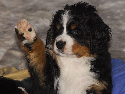 Physiotherapie für Hunde steht im Zentrum der neuen VetMed-Ausbildung