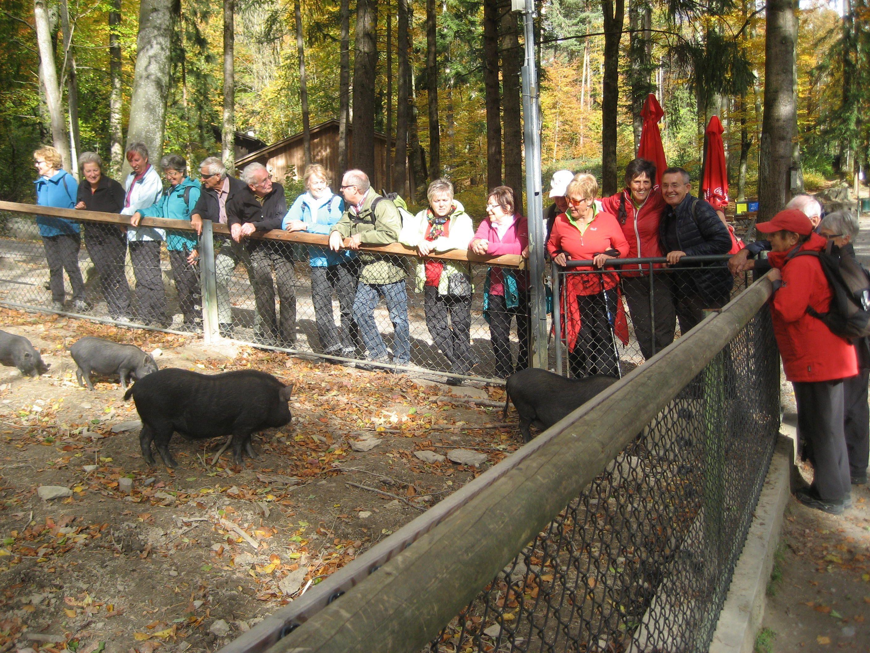 Die Teilnehmer bei den Wildschweinen