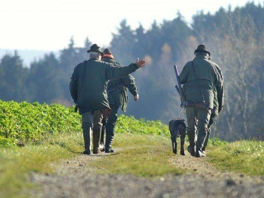 Eine Treibjagd in NÖ forderte einen Schwerverletzten