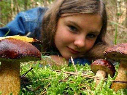 Biosphärenpark Wienerwald meldet zahlreiche Pilz-Erstfunde