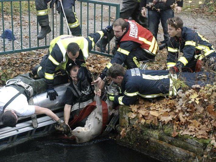 Der Rehbock konnte unverletzt geborgen werden.