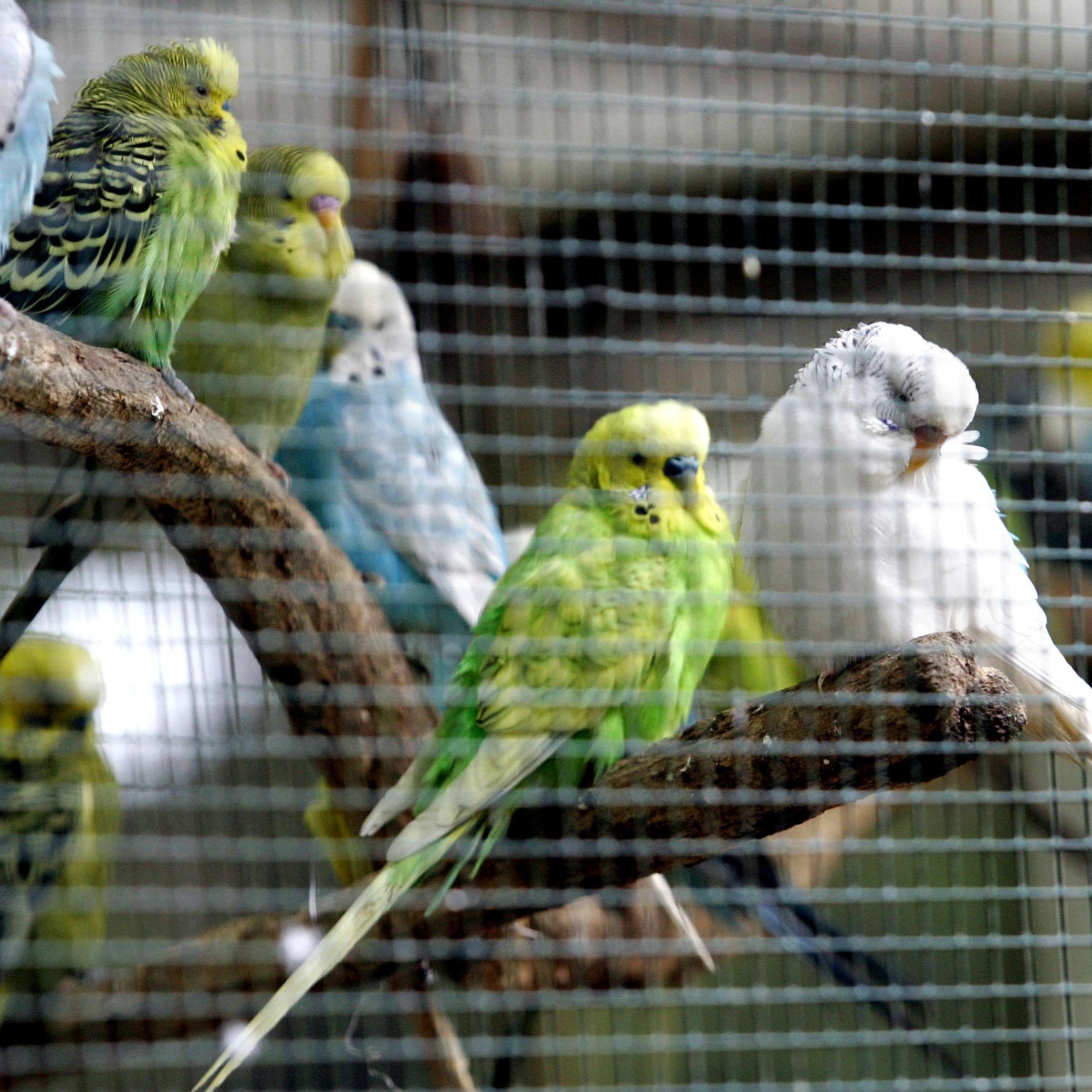 Am Montag wurden 165 Ziervögel aus einem Verschlag in Wien-Liesing befreit.