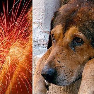 Für Hund, Katze und Co. ist die Silvesterknallerei belastend