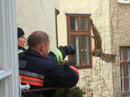 Feuerwehrleute befreiten den Vogel aus seiner misslichen Lage.