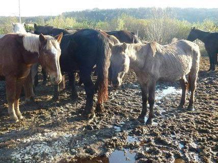 Rund 140 Tiere wurden unter schlechten Bedingungen gehalten.