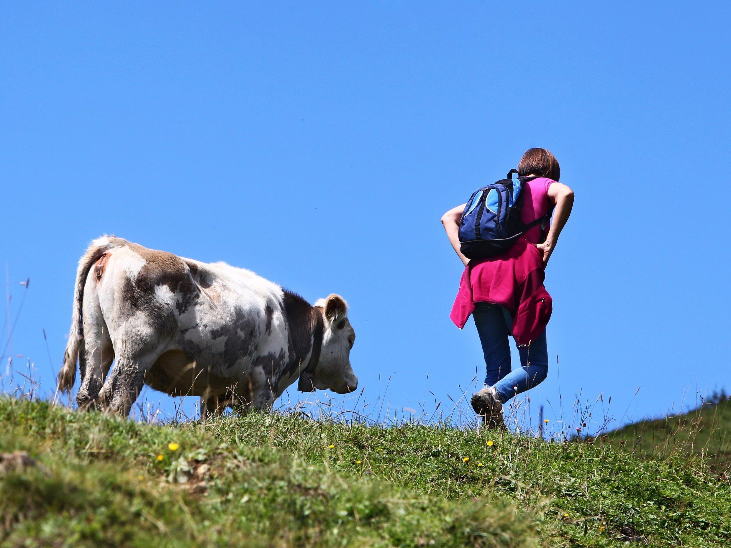 Emissionen wahrscheinlich für HCB in Milch verantwortlich.