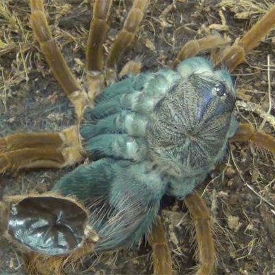 Das Video ist nicht fürs Arachnophobiker.