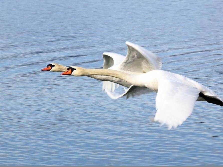 Gratis Flugshow für die Besucher am Naherholungsgebiet Paspels.