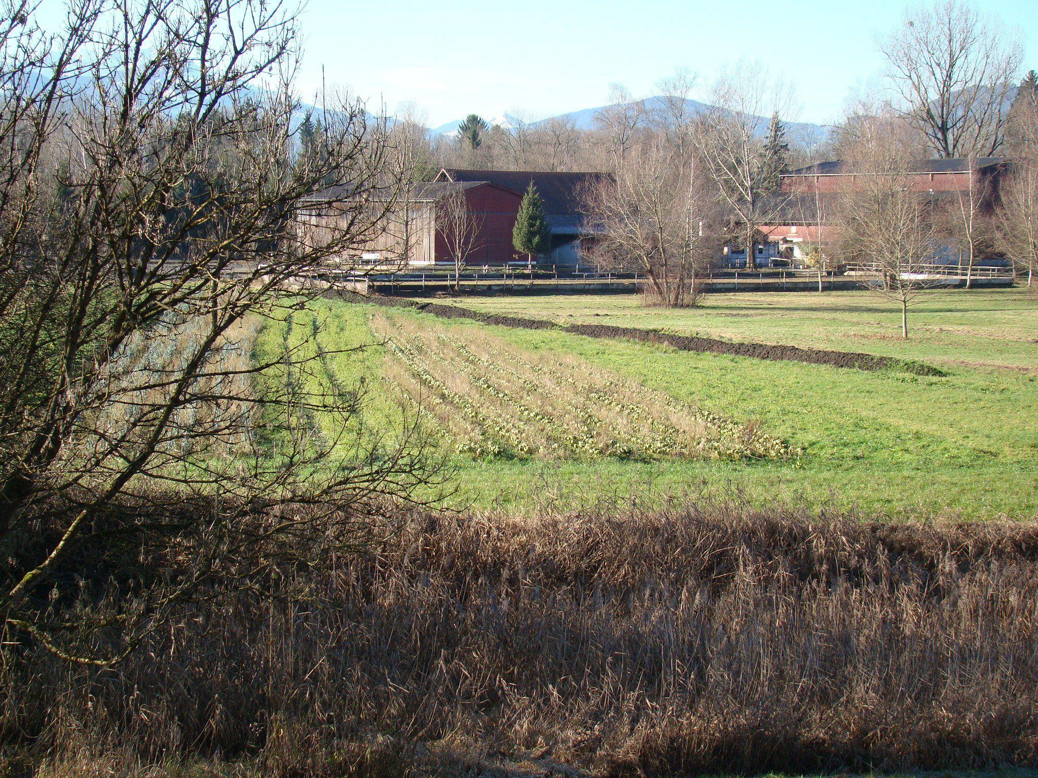 Blick vom Seelachen-Damm zum Lustenauer Gutshof Heidensand in Richtung der Schweizer Gemeinde Schmitter.