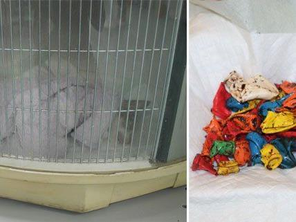 Katze Hope in der Wärmebox, nachdem ihr diese Luftballons aus dem Körper entfernt wurden