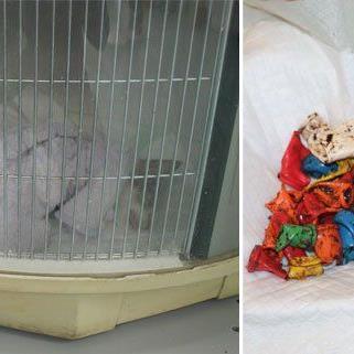 Katze Hope war zunächst durch eine Not-OP gerettet worden