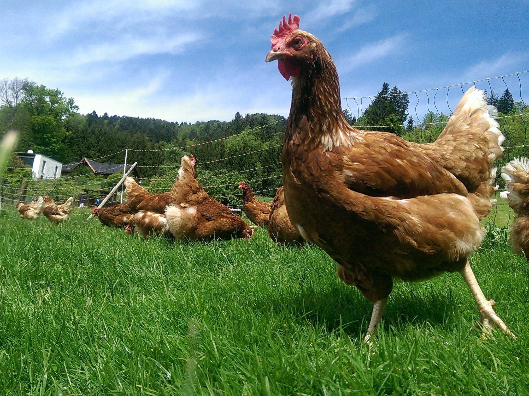 Mit frischen Eiern von Marthas glücklichen Hühnern werden wunderbare Köstlichkeiten gezaubert.