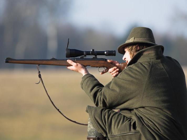 Laut der Behauptung des Beschuldigten soll die Kuh letztendlich durch Schüsse aus dem Gewehr eines Jägers getötet worden sein.