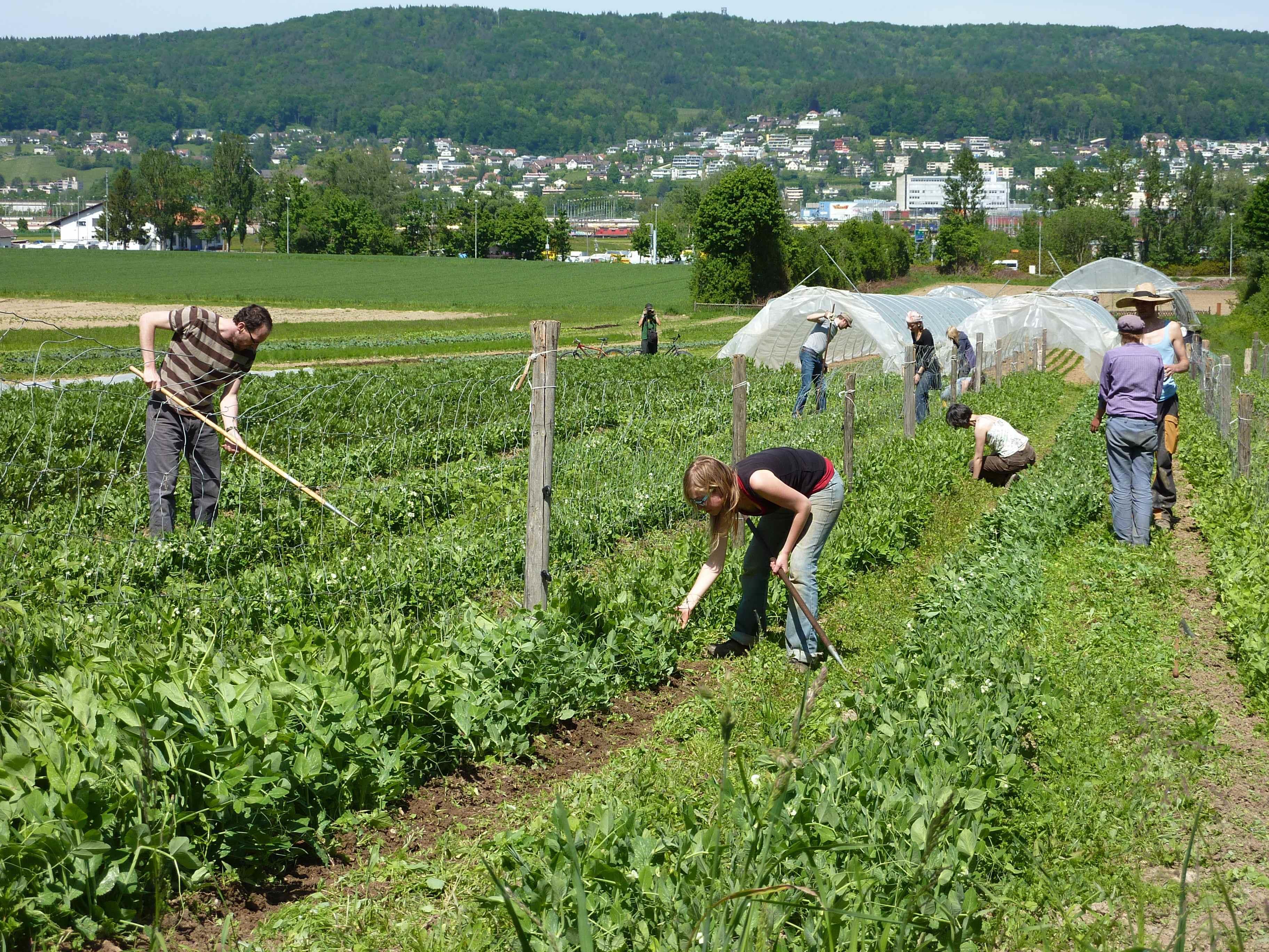 Info-Abend für Interessierte an einem genossenschaftlichen Garten in Götzis, der seine Mitglieder rund ums Jahr mit frischem, saisonalem Gemüse versorgen soll.
