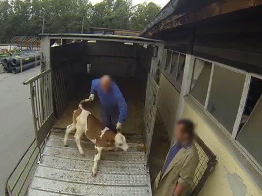 Video zeigt unermessliches Tierleid.
