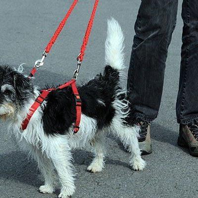 Wenn es dunkel wird, müssen Hunde und Halter besonders auf gute Sichtbarkeit achten
