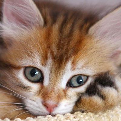 Fragwürdige Facebook-Seiten rufen zur Gewalt gegen Katzen auf