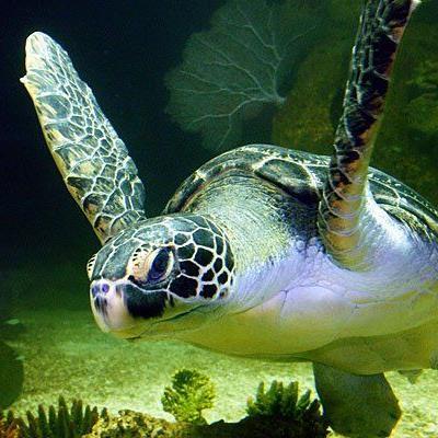 Michael Häupls Patenkind Meeresschildkröte Puppi zieht die Besucher an