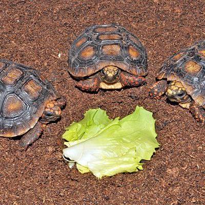 Schildkröten-Babys im Haus des Meeres