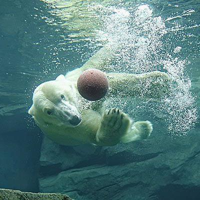 Die Eisbärenwelt im Tiergarten Schönbrunn ist immer einen Besuch wert