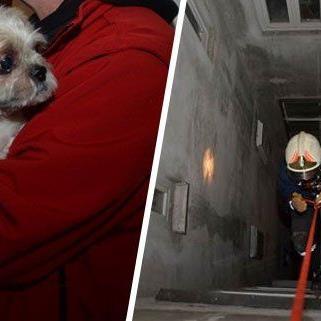 Dieser Hund wurde aus dem Lichtschacht in Alsergrund gerettet