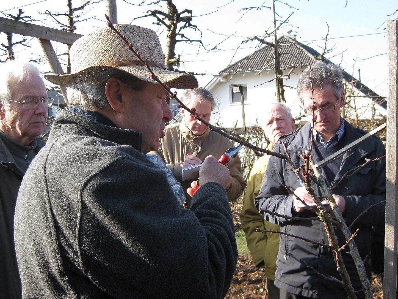 Der OGV Altach lädt zum Schnittkurs für Marillen- und Pfirsichbäume am kommenden Samstag, 7. März.