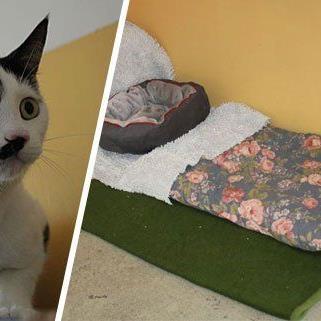 Für Katze Pünktchen wurde im Wiener Tierschutzhaus ein Mamazimmer eingerichtet