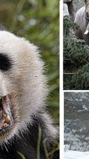 Im Tiergarten Schönbrunn entstehen die tollsten Schnappschüsse