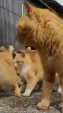Japanische Insel Aoshima wird von verwilderten Katzen bevölkert.