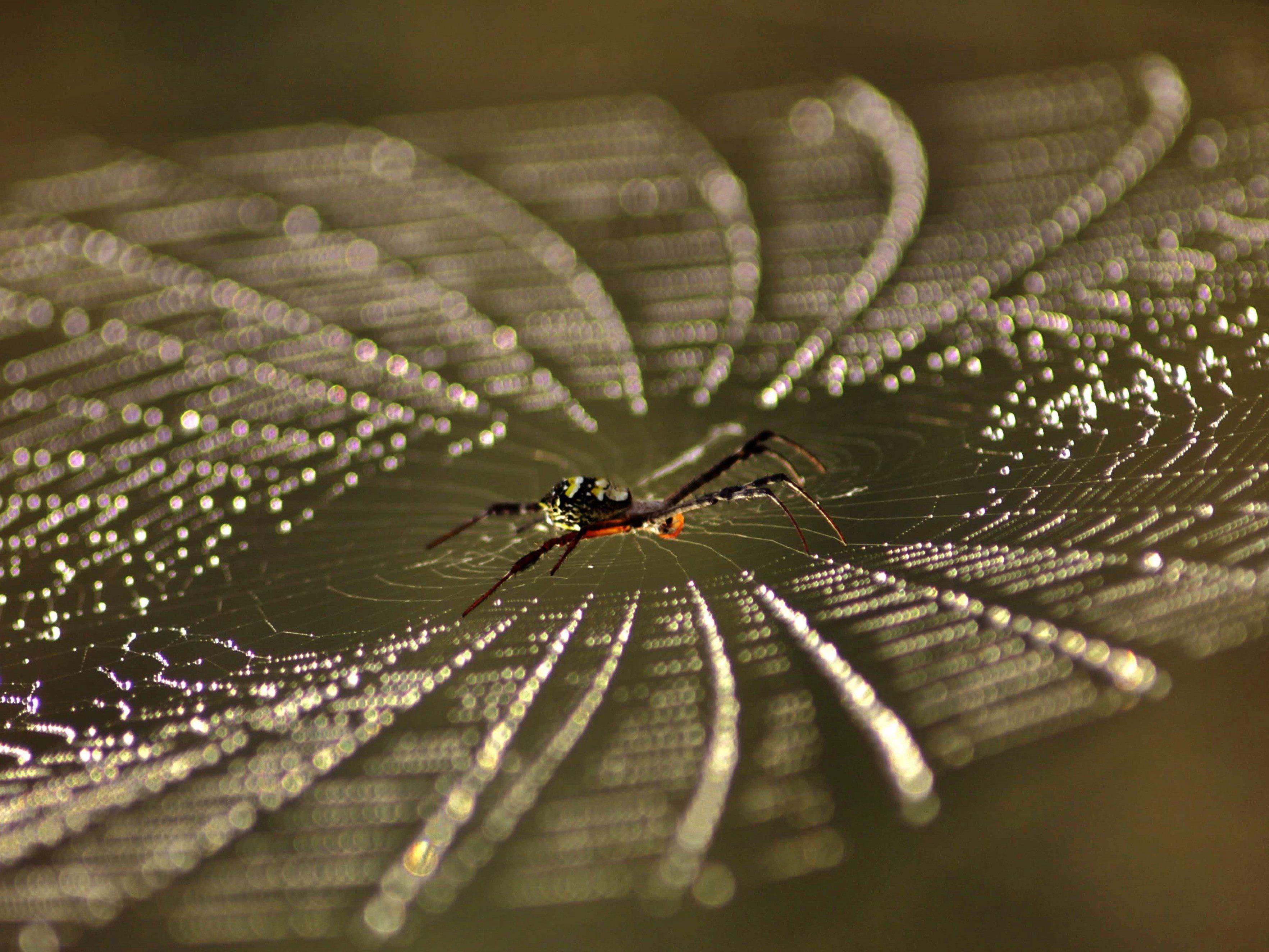 Forscher haben herausgefunden, wie genau Spinnen Seide produzieren.