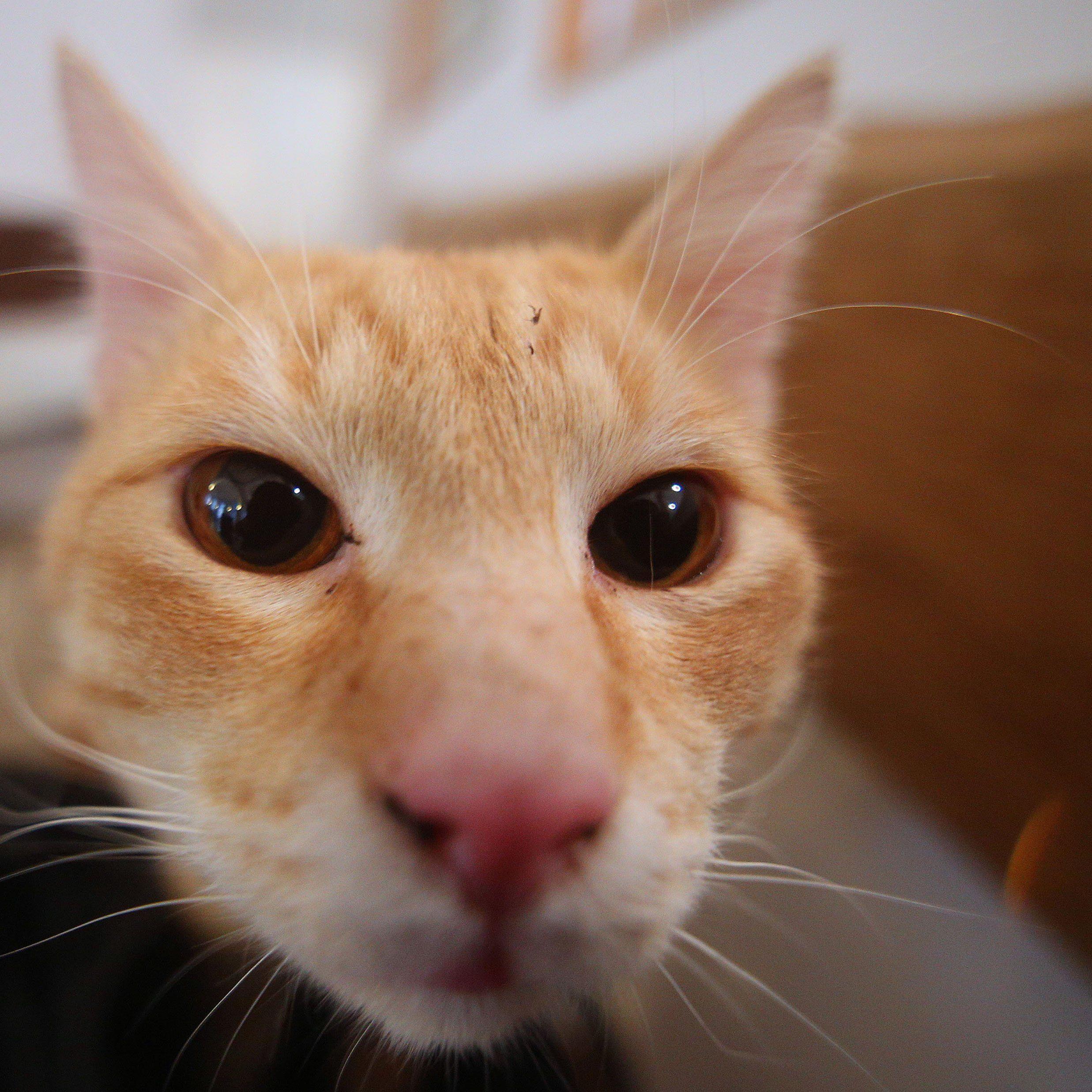 Bei manchen Katzen löst sogar Zungenschnalzen einen Krampfanfall aus.
