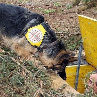 Ein Rettungshund bei einer Einsatzübung